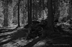 Zauber Wald by meyer werner on Plants, Kite, Woodland Forest, Planters, Plant, Planting, Planets