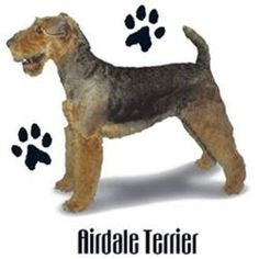 Airedale Dog HEAT PRESS TRANSFER for T Shirt Tote Sweatshirt Quilt Fabric 801a