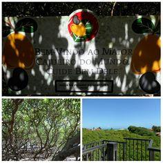 Maior cajueiro do mundo - Praia de Pirangi do Norte - Natal - Rio Grande do Norte - Brasil #viagem #travel #Brazil
