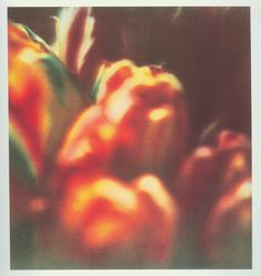 © Cy Twombly photo -Tulips, Collection particulière, 1985