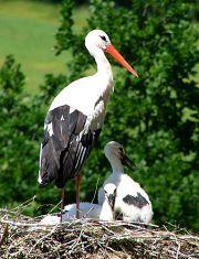 We  are Family ! Stork Live at MAKOV - www.makov.cz