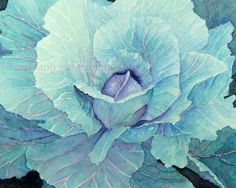 beautiful watercolor artwork | Beautiful cabbage watercolor painting on etsy :) | TURQUOISE