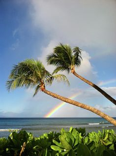 Two Palm Trees On Beach And  Rainbow Over sea, Maui