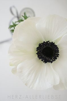 Anemone by herz-allerliebSt one of my favorite flowers Amazing Flowers, Fresh Flowers, Spring Flowers, White Flowers, Beautiful Flowers, Exotic Flowers, Spring Colors, Yellow Roses, Cut Flowers