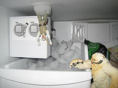 Meanwhile, in your freezer...