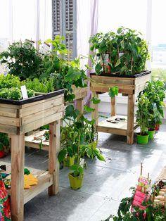 ¡Manos a las #plantas! Móntate un #huerto urbano #jardinería                                                                                                                                                      Más