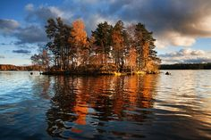 island in Lake Vuoksa, on the Carelian Isthmus separating Russia and Finland: photo by Dmitry A. Mottl, 2009 The golden glow . Autumn Lake, Autumn Trees, Morin, Seen, Desktop Pictures, Wallpaper Pictures, Largest Countries, Blog Voyage, Big Sky