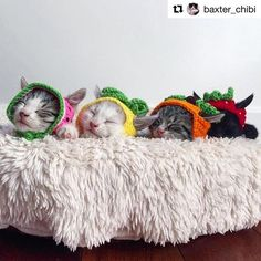 Now this is what I was hoping my kittens would do with their matching pineapple  hats!  Maybe I have to sneak in while they're sleeping bwahhahaha >>>>>#Repost @baxter_chibi who also made the hats. Check out her account for more  in  photos. This photo credit:  @veggiedayz