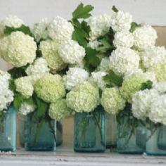 White Hydrangea in jars