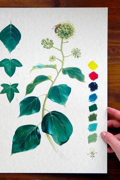 """Stay in connection with nature with this botanical art study!  Show your love for art decorating your walls with a fragment of creative process. This English ivy study is a preliminary sketch for the oil painting """"Big Mask Fountain"""". Find out all the details on **www.cinziamarotta.eu** #oilpainting #natureart #botanicalart"""