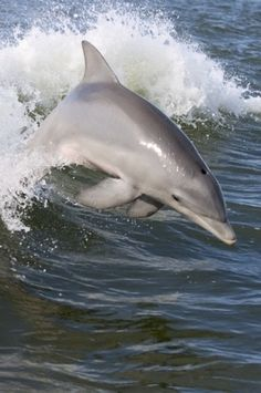 DOLPHINS!!!!!!!! :)