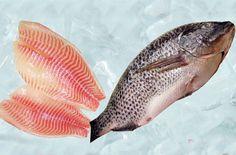 We sell quality fresh fish,fillets and kapenta direct from Lake Kariba Zimbabwe call +263 736 851 603