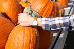 Looking for the Great Pumpkin (wearing @aibiwatch)