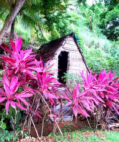 Dominica.. A small patch of heaven disguised as four walls