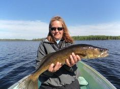 Walleye in Wood and Brush: In many lakes drowned wood and brush are the main dominate cover that walleyes rely on as a food source and shade from the sun. You will find scattered walleye around alm…
