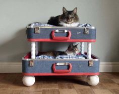 These Do It Yourself Pet Beds Are Extremely Awesome And Easy To Create!   Deveoh!