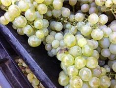 #Muratie #Chardonnay Farm Life, Fruit, The Fruit