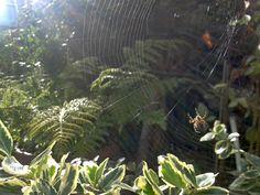 Spider, 22/09/13