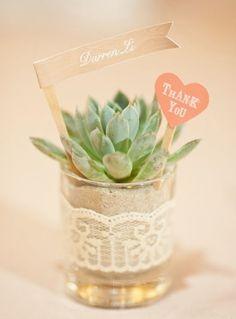 Las Suculentas, también llamadas cactus con forma de rosa, son plantas exóticas ideales para la decoración de cualquier evento.