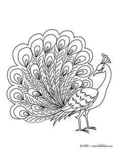 Peacock coloring page -