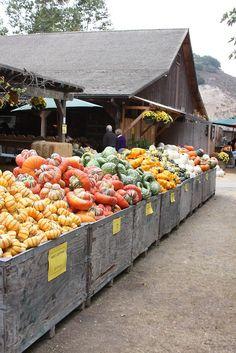 #farmer's #market #squash