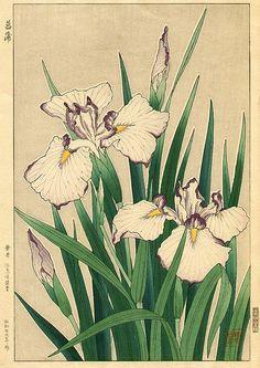 White Iris, by Shodo Kawarazaki (1889-1973), 1954