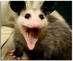 "@Amber Davis @Rickie Cayton @Lee Slack....Possum say ""That Cray!!"""