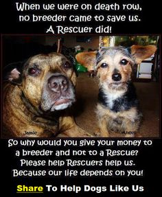 Support your Local No Kill Shelters, Animal Sanctuary's and your Non Profit Private Animal Rescuers .......Please, help us, help the animals xoxoooo
