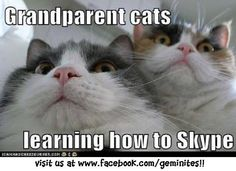 Grandparent cats learning how to Skype.  Hahaha!  Looks just like my parents...