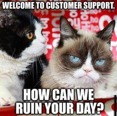 Grumpy Cat & brother, Pokey.