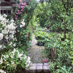 Lieblingspflanzen Beautiful Gardens, Gardening, Dreams, Plants, Outdoor, Garden Plants, Garden Art, Stones, Nature