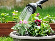 Como poupar água no jardim Saiba como fazer mais coisas em http://www.comofazer.org/como-poupar/como-poupar-agua-no-jardim/