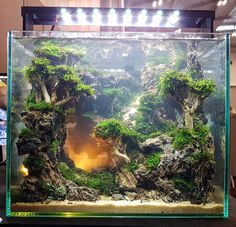 261 Best Fishes Images In 2020 Planted Aquarium Fish