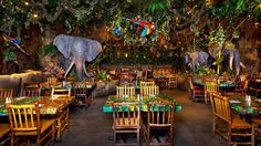 DTD - Rainforest Cafe reservations HIGHLY recommended!  Dinner 714-772-0413  (online reservations accepted for breakfast & lunch)