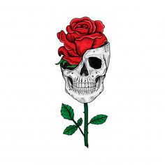 Tattoo and t shirt design hand drawn skull and rose premium Skull And Rose Drawing, Rose Drawing Tattoo, Skull Rose Tattoos, Art Rose, Skeleton Art, Skull Wallpaper, Tattoo Flash Art, Tattoo Illustration, Skulls And Roses