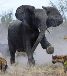 Top 10 des animaux les plus dangereux du monde