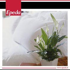 Le lunghe foglie verdi e gli eleganti fiori bianchi dello spathiphyllum non richiedono tanta luce e sono ideali nella zona notte, non solo per il loro gradevole profumo: una pianta di spathiphyllum è in grado di umidificare e purificare l'aria di una stanza di circa 10 metri cubi, per dormire sonni tranquilli!    #green #arredoverde #dormirebene #sonno #spathiphyllum #gigliodellapace