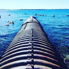 Lake Ontario, Kingston Waterfront, Bath Rd. Pipe in lake surrounded by geese. #startup #entrepreneur #smallbiz #graphicdesign #media #marketing #socialmedia #print #business #creative #ygk #kingston #bydesign #design #digital #picoftheday #promo #graphic #graphics #photography #freelance #lakeontario #waterfront #nature