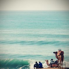 Morocco    ::    two camels two Men one beach ( by Alive Fisher )