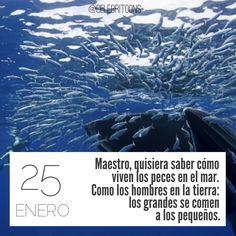 «Maestro, quisiera saber cómo viven los peces en el mar. Como los hombres en la tierra: los grandes se comen a los pequeños» .  William Shakespeare  (1564-1616)  Escritor británico