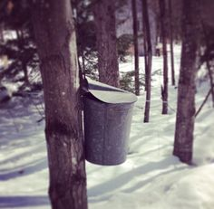 The #newhampshire #mapleproducers maple weekend is March 28 & 29 this year.  https://instagram.com/p/msIqIsitX6/?modal=true