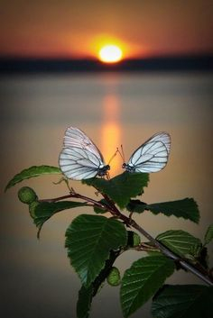 Beautiful Flowers Wallpapers, Beautiful Nature Wallpaper, Beautiful Butterflies, Beautiful Sunset, Pretty Wallpapers, All Nature, Nature Images, Nature Pictures, Cool Pictures