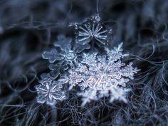 Snowflakes    Snowflake macro shot, february 2011. Background: dark gray woolen fabric.