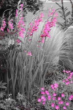 Splashes of pink ✨