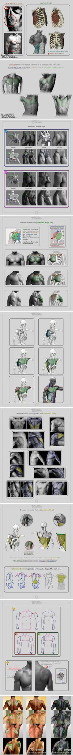 Anatomia, desenho da musculatura.  Dream collected paintings original painting tutorial (327 Figure) _ petals illustration