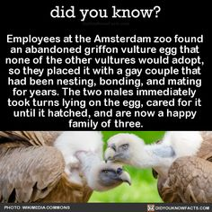 did you know? - Employees at the Amsterdam zoo found an abandoned...