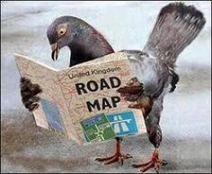 31st week in Ordinary Time (071114): Homing pigeon. Lost your way? The bible will guide you home.