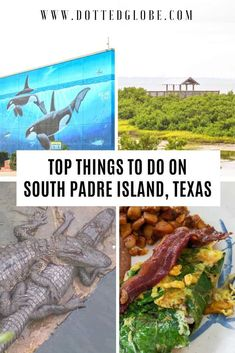 Visiting Texas's resort town of South Padre Island? Find the best things to do on South Padre Island including birding, sea turtle conservation, horse riding, amusement parks, and water activities in this detailed guide via @dottedglobe #usa #texas #travel |south padre island things to do | south padre island what to do | things to do in south padre | texas gulf coast | texas vacations |best family vacation destinations in the USA| beach holidays| visit south padre island texas travel Texas Tourism, Texas Travel, Travel Usa, Family Vacations In Texas, Best Family Vacation Destinations, Family Travel, South Padre Island Texas, Turtle Conservation, Visit Texas