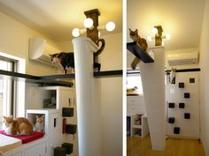 Beautiful vertical cat walk layouts!:) Can't wait until we start our building! maryanne