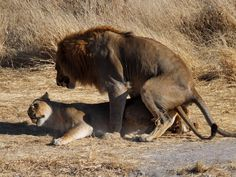 Scandal Lion 2016